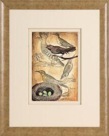 Sorrento+Birds+Nest+b